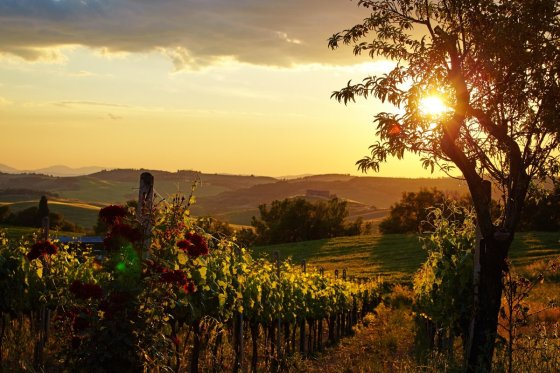 cover photo vineyard